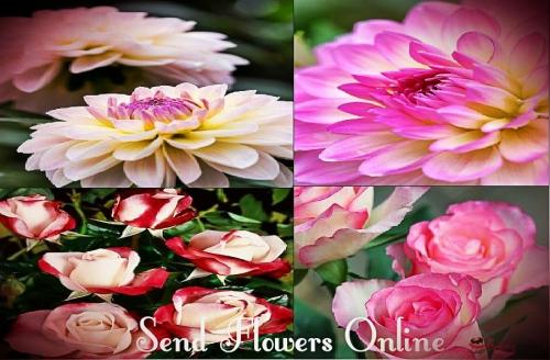 online flower orders